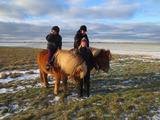 Islandske heste ved Storebælt